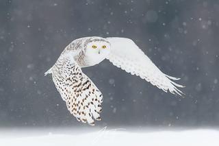 Le fantôme d'hiver