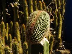 Cactus Country, Strathmerton 1405 (Lesley A Butler) Tags: victoria strathmerton cactuscountry cacti australia