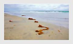 Breathing (Christina's World Off and On) Tags: delmar beach seascape sea seagull seaside ocean socalifornia seaweed sand sky sandiego creative california colorful nature painterly textures blue innamoramento