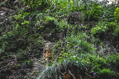 DSC_0149 (Hilðr) Tags: mountains trees rocks forest woods view horizon canyon hills pine stones moss norse inspiration spirit hiking dark
