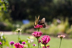 Remains of the summer (Irina1010) Tags: flowers butterflies garden colors bokeh nature colorful beauty canon