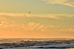 VOLARE ! (Salvatore Lo Faro) Tags: mare nuvole gabbiano oro azzurro onde risacca alba vento solitudine salvatore lofaro nikon 7200