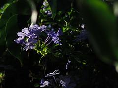 IMGP1514 Un instante de Luz.. (Eloy61) Tags: 06telephotozoom pentaxqs1 flowers summertime