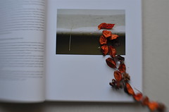 Deciduous (MPnormaleye) Tags: book leaves falling orange potpurri pages soft lensbaby 35mm seeinanewway utata utata:project=ip270