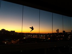 por do sol (jakza - Jaque Zattera) Tags: vidraçavidro através janela desafio15 challenge
