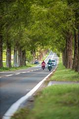 _DSC0011 (MIHARANNRANN) Tags: 琵琶湖 滋賀 メタセコイア並木 バイク