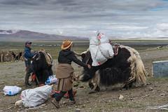 D4I_1585 (riccasergio) Tags: china cina tibet alidiqu xizangzizhiqu cn kailash kora