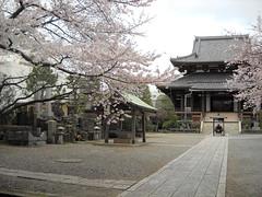 Temple, Tokyo (NengHetty) Tags: tokyo temple shrine park ueno sakura cherry blossoms tree blossom japan 桜 東京 東京都