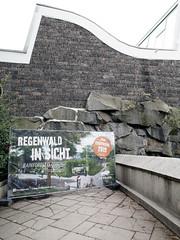 Der kommende Regenwald. / 07.09.2018 (ben.kaden) Tags: berlin friedrichsfelde tierparkberlin architekturderddr ostmoderne architektur alfredbrehmhaus heinzgraffunder 1963 lotharköhler günterqueck zooarchitektur 2018 07092018