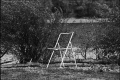 inaugural (Arpadkoos) Tags: inaugural blackandwhite monochrome chair duna water tree yashica mp 107mp 107