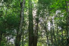 The kindness of trees (r3d.rav3n) Tags: sarver pennsylvania unitedstates us