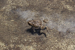 Doing the dead man, I mean frog, float (rozoneill) Tags: indigo lake sawtooth mountain willamette national forest cowhorn middle fork river oregon hiking