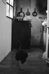 From the kitchen. (Ojo de Piedra) Tags: nikonf100 smalltown negativefilm monochrome travel tepehuacan kitchen blackwhite trix400 35mmfilm hidalgo mexico film kodak