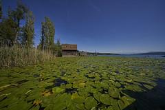 Lake Hallwil (ivoräber) Tags: lake hallwil hallwilersee see seengen switzerland swiss schweiz