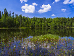 Springtime in the Nordmarka (RobertCross1 (off and on)) Tags: 1250mmf3563mzuiko em5 europe lilletryvann nordmarka norge norway omd olympus oslo scandinavia bluesky clouds flowers forest landscape nature reflection trees water wildflowers