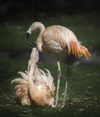 Flamingos in Love (lleon1126) Tags: detroitzoo zoo detroit birds waterbirds flamingos pink