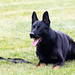 RCMP Police Dog Training