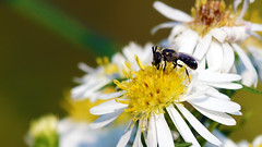 InsectHome0830150001.jpg (TonyM1956) Tags: elements macrounlimited sonyalphadslr sonyphotographing tonymitchell