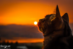 Kat_Mystic (Fraser8888) Tags: cat kitten felin sunset color sun outdoors nikon d60