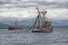 The seiner Osprey with Fishe Tender Ocean Maid 608 (Gillfoto) Tags: salmon alaska juneau seine commercialfishing southeastalaska