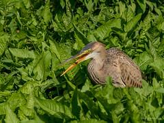 Happy Snack (wernerlohmanns) Tags: wildlife wasservögel natur nikond750 nsg deutschland sigma150600c schärfentiefe