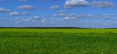 Field, Lithuania (Jolita Kievišienė) Tags: lithuania nature lietuva gamta laukas