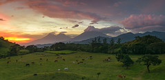 Pano (neritron) Tags: guatemala landscape landscapes sunset bull finca villa canales fuego agua acatenango volcano volcan volcanoe volcanoes vulcanos vulcan green color colorful image
