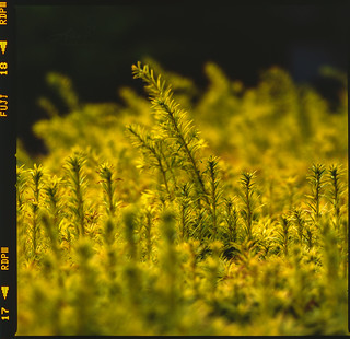 Top of Trees - Film Hasselblad