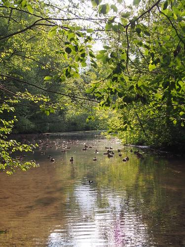 Река Химка, парк Покровское-Стрешнево