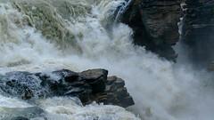 (Thunderwall) Tags: rock wet motion moving falling rapid mountain athabasca falls jasper banff david thompson alberta canada