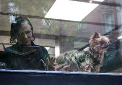 New York (ilsevanderwoude) Tags: dog window newyork streetphotography littledog women reflection dogs street coffee