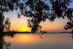 Sunset seen under a tree (VisitLakeland) Tags: finland kuopio lakeland summer auringonlasku backlight dark evening järvi lake luonto maisema nature outdoor scenery silhuet siluethe siluetti sunset vastavalo water