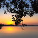 Sunset seen under a tree