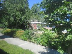 IMG_8342 (Andy E. Nystrom) Tags: bellevue washington wa bellevuewashington