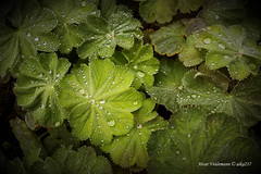 dew (aika217) Tags: dew canon eos 77d 1020mm