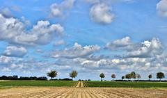 clouds (JH Photos!) Tags: clouds cloudporn sky blue horizon perspective perspectief germany deutschland duitsland nordrheinwestfalen northrheinwestphalia trees bomen selfkant lucht wolken jhphotos canon canon600d photography