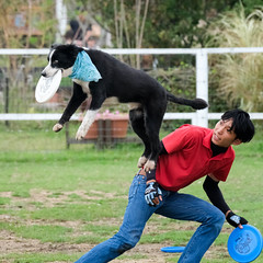 Boost me! (Ruroni Poru) Tags: japan kansai honshu kobe kobeanimalkingdom dog frisbee athletic jump performance squarecrop catch fuji xt3