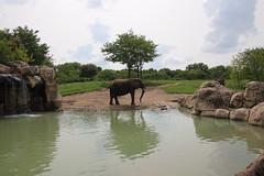 IMG_6722 (bronsonwo) Tags: indianapolis zoo