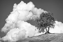 Bizarre tree meets clouds / Baum trifft auf Wolken (Steffen Schobel) Tags: baum tree cloud wolke sw bw schwarzweis blackandwhite landscape landschaft nature natur serfaus birke birch kontrast contrast