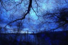 Dark days. (Bastiaan21) Tags: darkday dark darkness textured texture netherlands nederland nieuwemerwede biesbosch zuidholland dordrecht dordtsebiesbosch mood moody nikon nikond90 niederlande paysbas