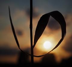 Abschied vom Tag (Regenbogenlicht) Tags: sonnenuntergang abend