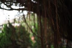 台灣大學法商學院_9 (Explored on Sep 2, 2018) (Taiwan's Riccardo) Tags: 2018 taiwan digital color dslr canon6dii zeisslens carlzeiss fixed 台北市 台灣大學法商學院 planar 50mmf17