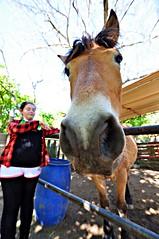 Friends (Dedalomouse Photos) Tags: cavalli horses caballos italia italy lagodivico animali animales animals colore color colors tommaso tommasoolmeda olmeda travel dedalomouse