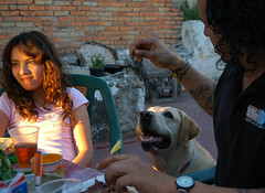 Breta offered a treat, Ariel, daughter, dinner on the rooftop, spring, sun, Guadalajara, Jalisco, Mexico (Wonderlane) Tags: mexico barbeque guadalajara jalisco family life 5918 bretagetsapieceofmeat ariel daughter dinnerontherooftop spring sun bretaofferedatreat meat breta offered treat globalvolunteerprojects dog watch