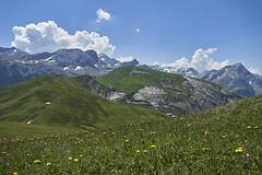 Trütlisbergpass (ivoräber) Tags: trütlisbergpass lauenen switzerland sony schweiz swiss suisse systemkamera blumen alps flower