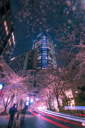 Roppongi Hills Sakura - Tokyo, Japan