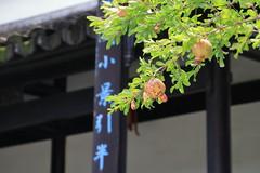 海寧-金庸書院 an academy of classical learning (沐均青) Tags: travel martial arts novel academy green black pomegranate