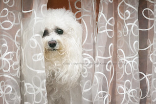 Who is that doggie in the window?