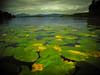 Loch Lomond (Nicolas Valentin) Tags: lochlomond scotland ecosse uk europe loch lomond kayak fishing lily water plant cloud clouds