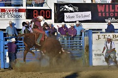 "Baker County Tourism – basecampbaker.com 47247 (Base Camp Baker) Tags: oregon ""easternoregon"" ""bakercountytourism"" basecampbaker ""basecampbaker"" ""bakercounty"" rodeo cowboys ""bakercitybroncandbullriding"" ""bakercity"" ""oregonrodeo"" ""minersjubilee"" oregonrodeo ramrodeo traveloregon travel tourism roughstock rodeolife bulls bullriding"